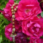W niedzielę, 11 marca modlitewne spotkanie Róż Różańcowych po Mszy św. o godz. 9.00.